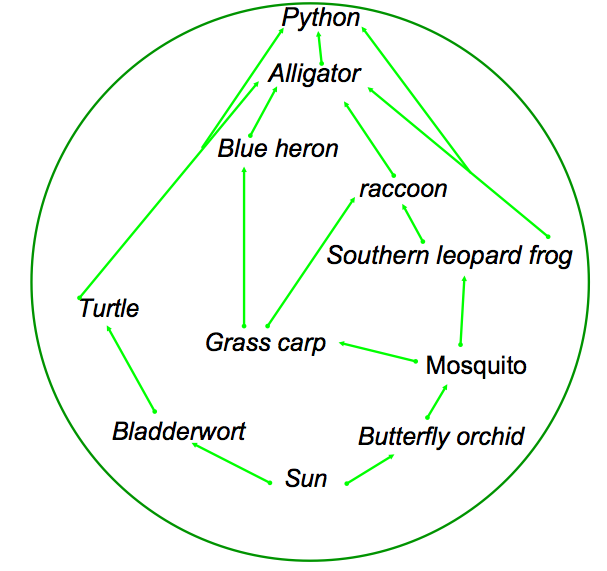 the everglades: a food web diagram essay Audubon has worked for over a century to protect and restore america's everglades famous for its abundance of bird life, the everglades has faced many challenges.